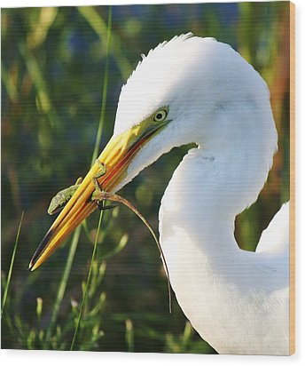 Great White Egret In The Lizard Wood Print by Paulette Thomas