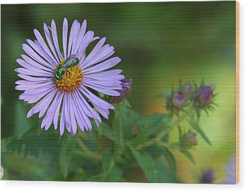 Green And Purple Wood Print by Doris Potter