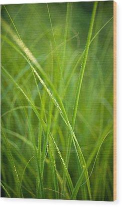 Green Prairie Grass Wood Print by Steve Gadomski