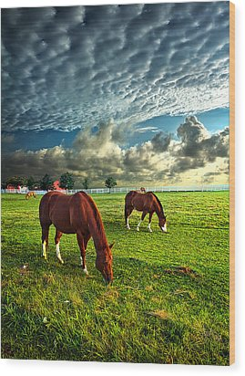 Hailey's Horses Wood Print by Phil Koch