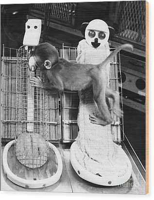 Harlows Monkey Experiment Wood Print by Photo Researchers, Inc.