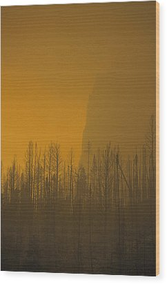 Haze Obscures Charred Pines Wood Print by Michael S. Quinton