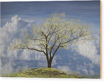 Hilltop Wood Print by Debra and Dave Vanderlaan