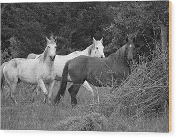 Horses In Black And White Wood Print by Rick Rauzi