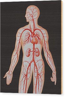 Human Arterial System Wood Print by John Bavosi