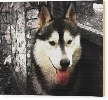 Husky Wood Print by Tilly Williams