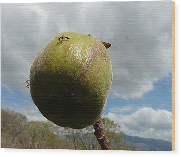 Hymenoptera Wood Print by Juan Francisco Zeledon