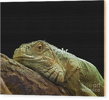 Iguana Wood Print by Jane Rix