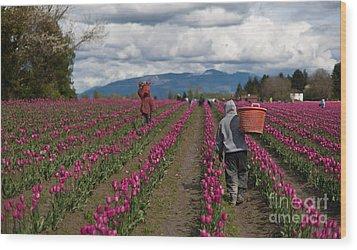 In The Tulip Fields Wood Print by Mike Reid