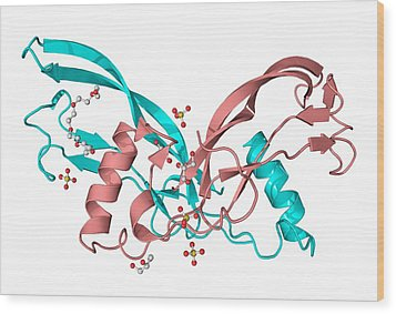 Inhibin Beta A Molecule Wood Print by Laguna Design