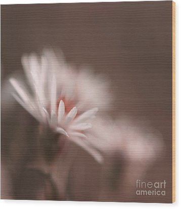 Innocence - 05-01a Wood Print by Variance Collections