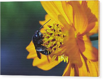 Insect And The Wild One Wood Print by Wanda Brandon