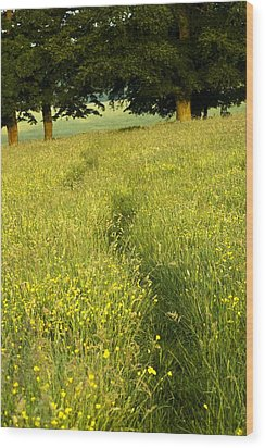 Ireland Trail Through Buttercup Meadow Wood Print by Peter McCabe