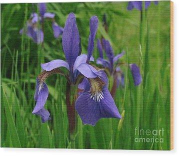 Irises Wood Print by Randi Shenkman