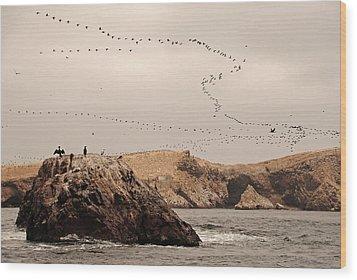 Islas Ballestas - Peru Wood Print by Andrea Cavallini