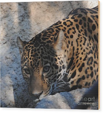 Jaguar In December Wood Print by DiDi Higginbotham