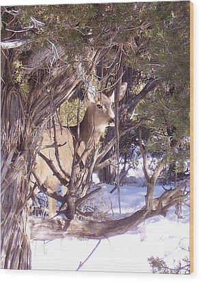 Juniper Deer Wood Print by FeVa  Fotos