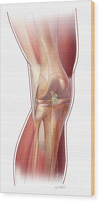 Knee Anatomy Wood Print by John M Daugherty and Photo Researchers
