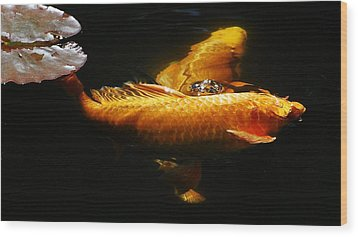 Koi Crossing Wood Print by Don Mann