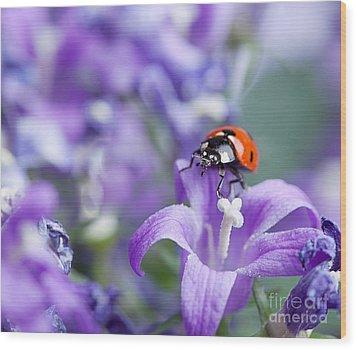 Ladybug And Bellflowers Wood Print by Nailia Schwarz