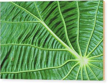Leaf Wood Print by by Jonathan Fife