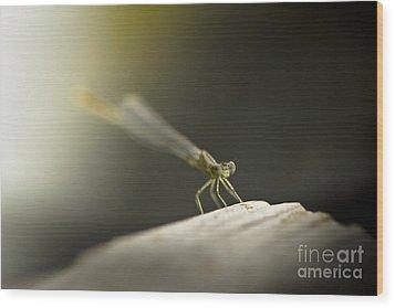 Like An Angel Wood Print by Kim Henderson