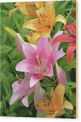 Lilies (lilium Sp.) Wood Print by Tony Craddock