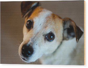 Lilly - The Jack Russell Wood Print by Callum Mcleod