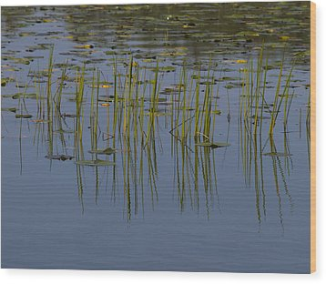 Lilly Pads Float On A River Wood Print by Stacy Gold