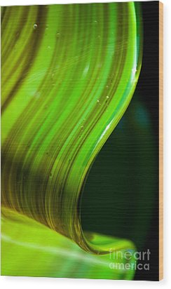 Lime Curl Wood Print by Dana Kern