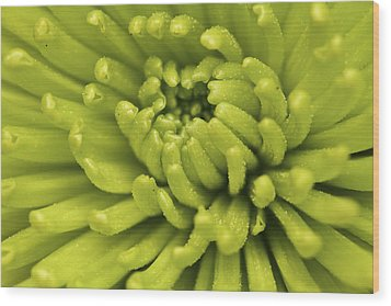 Littered With Pollen Wood Print by Pixel Perfect by Michael Moore