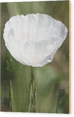 Little Hope Wood Print by  The Art Of Marilyn Ridoutt-Greene