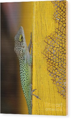 Lizard Wood Print by Sophie Vigneault