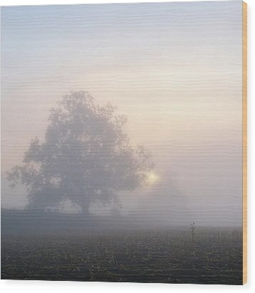 Lone Tree Wood Print by Paul Simon Wheeler Photography
