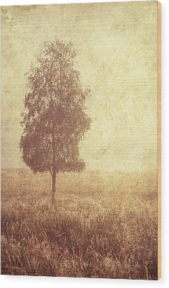 Lonely Tree. Trossachs National Park. Scotland Wood Print by Jenny Rainbow