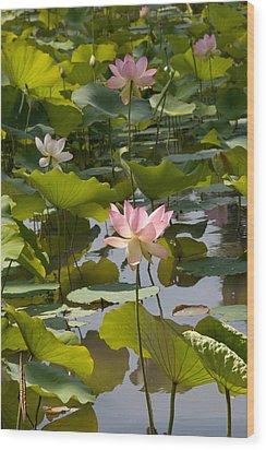 Lotus Standing Tall Wood Print by Dina Calvarese