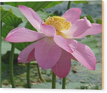 Lotus  Wood Print by Susan McNamara