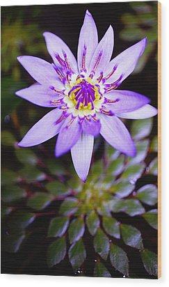 Lovely Lavendar Liliy Wood Print by Kicka Witte