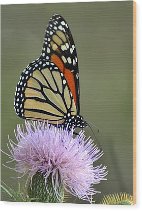 Magnificient Monarch Wood Print by Marty Koch