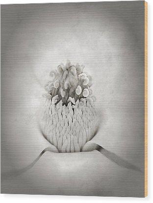 Magnolia 1 Wood Print by Rich Franco