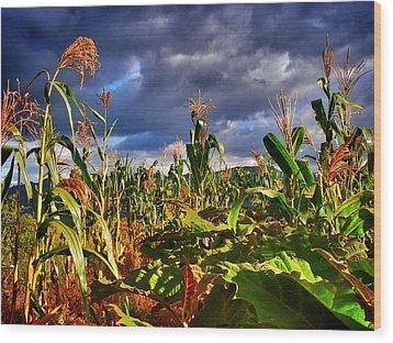 Maiz Wood Print by Skip Hunt