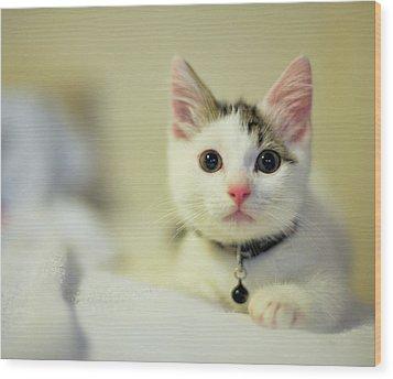 Male Kitten Sitting On Bed Wood Print by Nazra Zahri