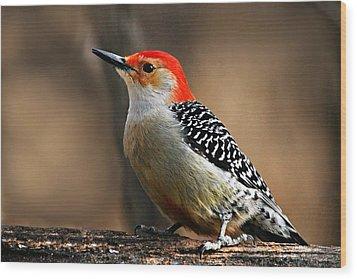 Male Red-bellied Woodpecker 4 Wood Print by Larry Ricker
