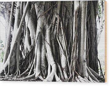 Mangrove Tentacles  Wood Print by Douglas Barnard