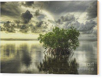 Mangroves I Wood Print by Bruce Bain