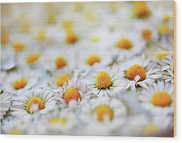 Marguerite Flowers Wood Print by Uccia_photography