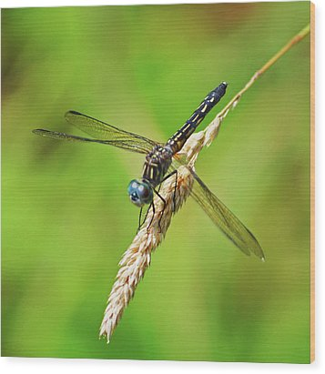 Wood Print featuring the photograph Meadowhawk by Rodney Campbell