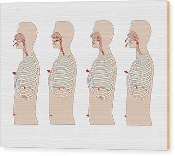 Mechanics Of Respiration, Artwork Wood Print by Peter Gardiner