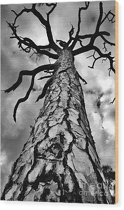 Medusa Pine Wood Print by Lynda Dawson-Youngclaus