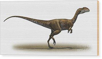Megapnosaurus Kayentakatae Wood Print by Sergey Krasovskiy